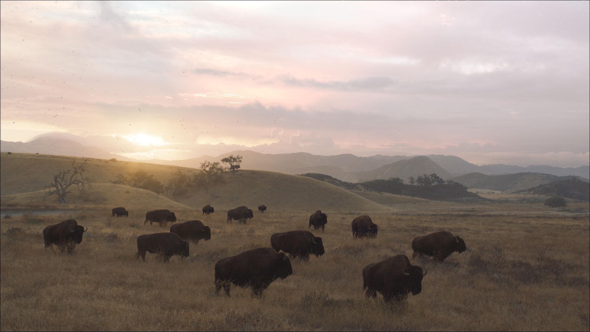 Esurance – Buffalo Roam